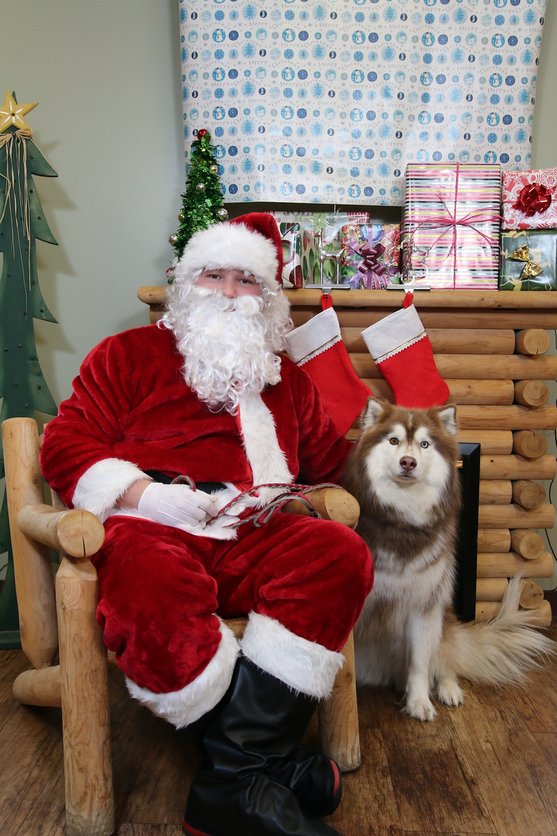 IMAGE: https://blakec-photography.smugmug.com/Santa-PAws-Photos-12-05-15/i-DtQxJFR/0/X3/Santa%20Paws_042-X3.jpg