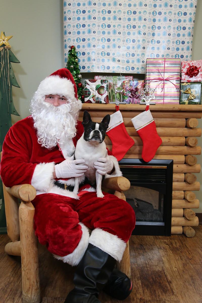 IMAGE: https://blakec-photography.smugmug.com/Santa-PAws-Photos-12-05-15/i-F6dXjWm/0/X3/Santa%20Paws_050-X3.jpg