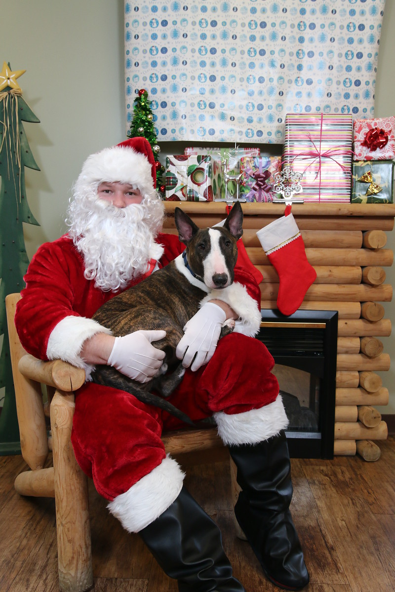 IMAGE: https://blakec-photography.smugmug.com/Santa-PAws-Photos-12-05-15/i-STXq8Ws/0/X3/Santa%20Paws_054-X3.jpg