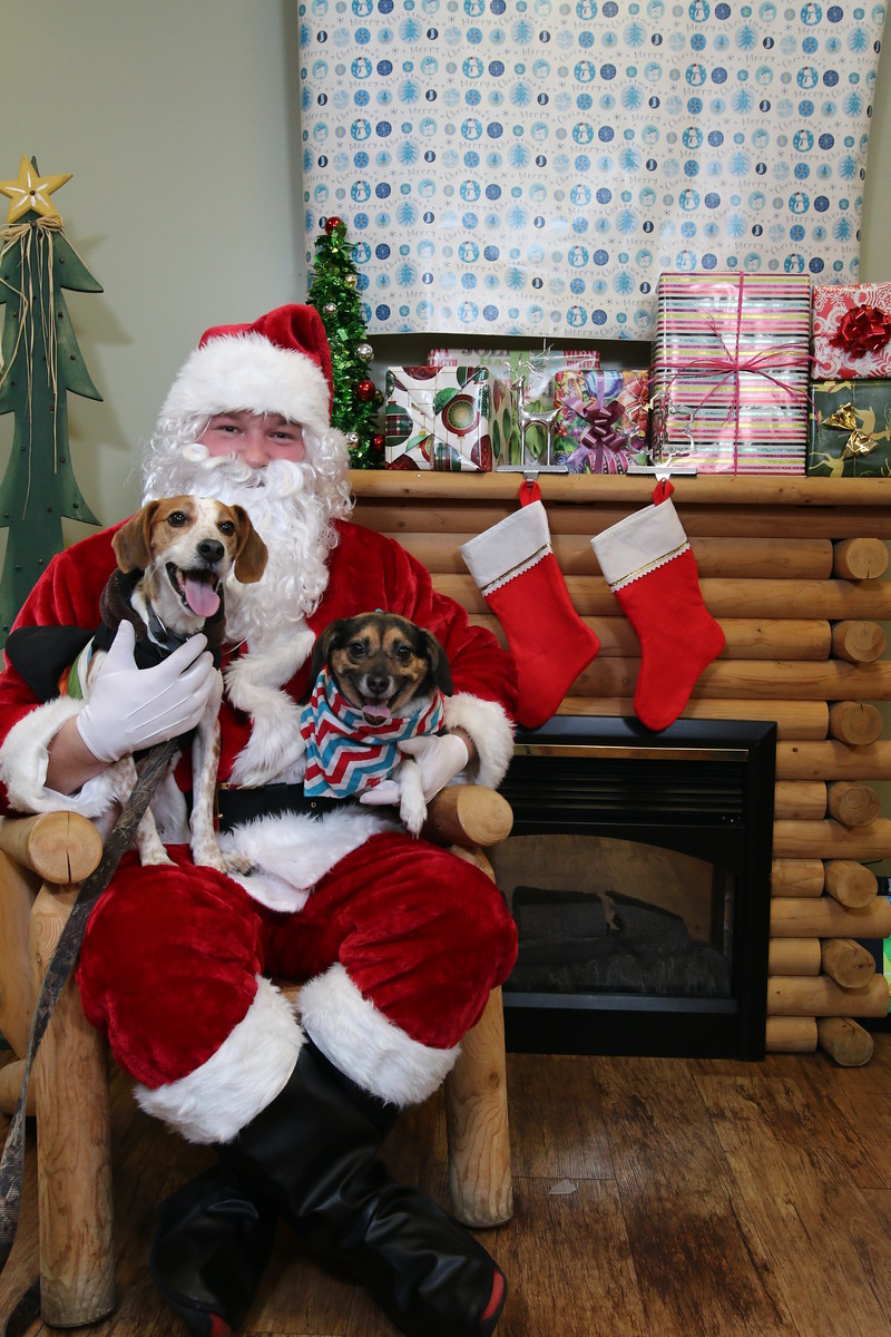 IMAGE: https://blakec-photography.smugmug.com/Santa-PAws-Photos-12-05-15/i-VhWMTJs/0/X3/Santa%20Paws_017-X3.jpg