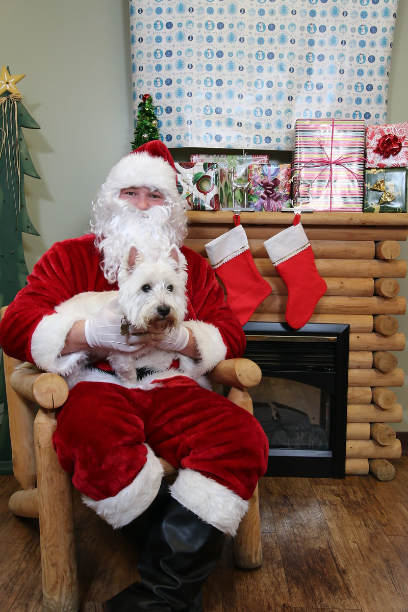 IMAGE: https://blakec-photography.smugmug.com/Santa-PAws-Photos-12-05-15/i-gDJXcxj/0/X3/Santa%20Paws_046-X3.jpg