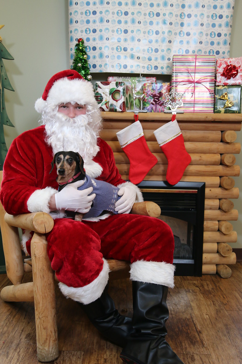 IMAGE: https://blakec-photography.smugmug.com/Santa-PAws-Photos-12-05-15/i-ktQccPv/0/X3/Santa%20Paws_063-X3.jpg