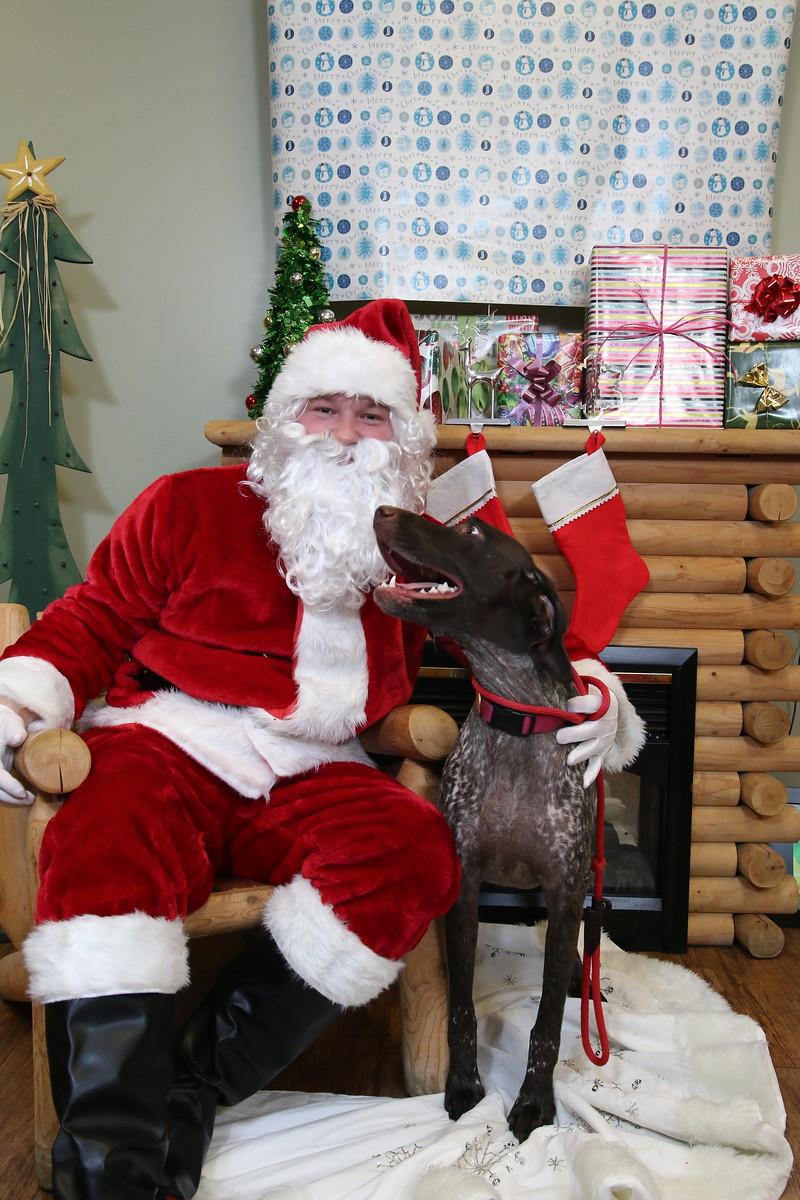IMAGE: https://blakec-photography.smugmug.com/Santa-PAws-Photos-12-05-15/i-mPgDpT9/0/X3/Santa%20Paws_010-X3.jpg