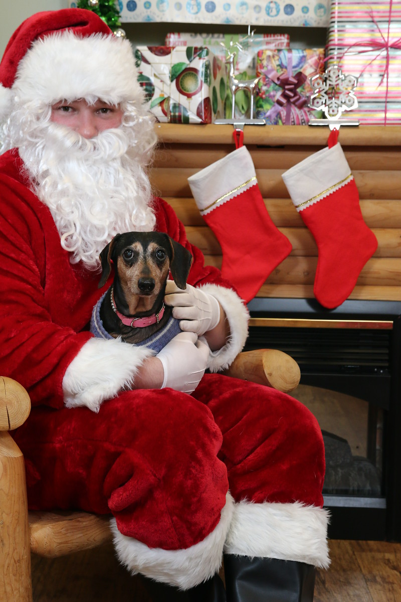 IMAGE: https://blakec-photography.smugmug.com/Santa-PAws-Photos-12-05-15/i-vjJNKTK/0/X3/Santa%20Paws_062-X3.jpg